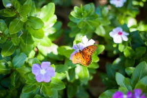 Flowers and butterfly in sunshine